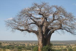 Tanzania y Zanzíbar en privado con guía-conductor