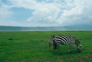 Safari con relax en las playas de Zanzíbar: la isla de las especias