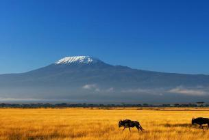 Tanzania: Trekking Kilimanjaro / Ruta Marangu