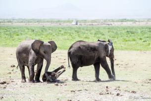 Safari Kenia 8 días en privado con Amboseli