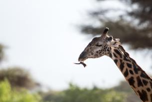 Safari Kenia 10 días en privado con playa en Diani