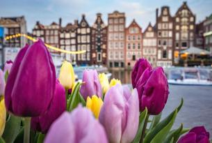 Jardines de Tulipanes en grupo, Ámsterdam