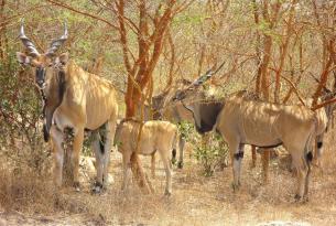 Senegal: Descubriendo Casamance