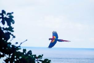 Costa Rica y su manto de colores