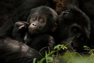 Safari Uganda al completo en grupo