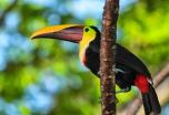 Bellezas de Costa Rica, 14 días