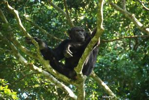 Gorila Trek Confort