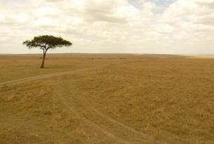 Safari fotográfico Kenya