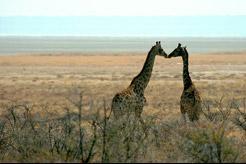 Kenya & Tanzania Flying Safari