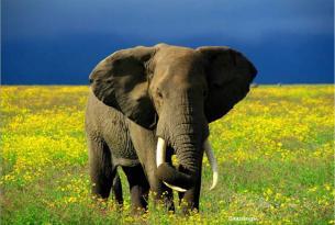 Memorias de África Clásico & Confort