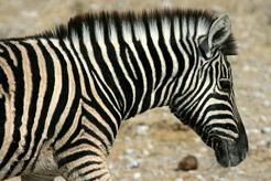 Sudáfrica Flying Safari