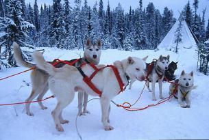 Laponia Navidades en Rovaniemi