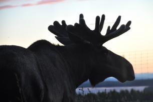 Aventura en Tierra de los Sami, Laponia