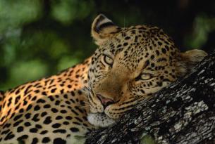 Sudáfrica 9 días (Johannesburgo, Parque Kruger y Ciudad del Cabo)