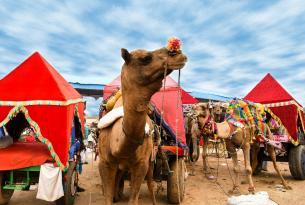 Feria del Camello y Dev Deepawali: Delhi, Agra, Jaipur, Pushkar y Benarés (salida especial en grupo)