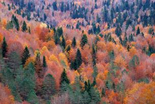 Viaje a la Selva de Irati (Pirineo oriental navarro)