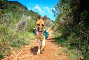 Camino de Santiago con mascota: de Sarria a Santiago de Compostela