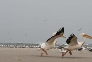 Senegal -  Parques Naturales del Atlántico y País Bassari o Delta del Saloum. - Especial fin de año