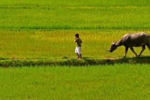 Indonesia -  Sulawesi, País Toraja y extensiones - Salidas a partir de dos personas