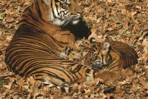 INDIA -  Rajastán y reservas del Norte. En busca del tigre de Bengala - Especial fin de año.