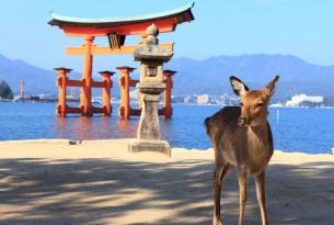 Japón a tu aire desde Hiroshima con parque de macacos y región onsen de Nagano