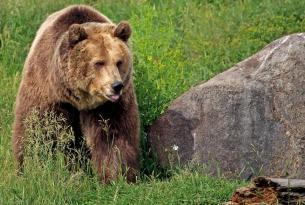 Viaje a Canadá en grupo: expedición grizzly