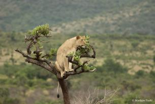 Kenia, Uganda y Ruanda: vida salvaje y safari de gorilas en 15 días