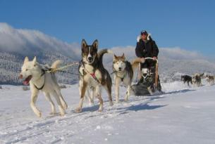 Finlandia. Husky y raquetas en Laponia