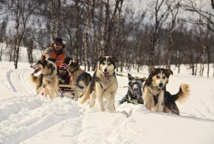 Noruega: Lofoten, auroras boreales y trineo de perros. 7 días