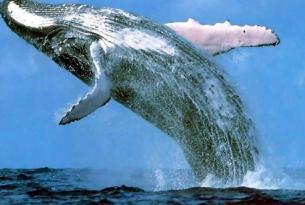Puente de Noviembre: auroras boreales y ballenas en Lofoten (Noruega)