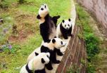 12 Días Tour por China con Oso Panda