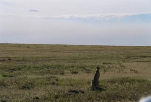 Ruta Safari Masai Experience