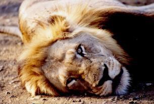 Safari Jambo