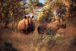 Sudáfrica: Ruta Jardín y Parque Kruger