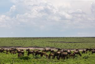 Tanzania: Safari Ndoto