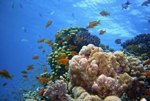 10 días en Egipto y el mar Rojo