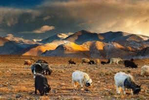 Tíbet - El techo del mundo