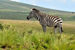 Aventura en Tanzania y Zanzibar