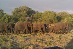 Aventura en Sri Lanka