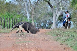 Viaje en moto Brasil, Bonito y Pantanal