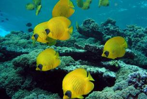Viaje buceo safari Mar Rojo ruta Norte