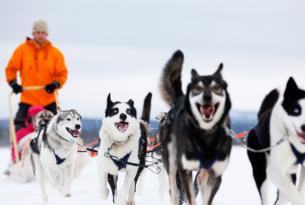 Finlandia: Aventura en el Tren de Laponia