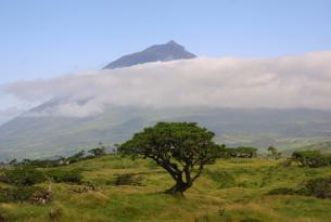 Fin de año en la isla de Terceira (Azores)