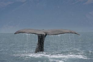 Costa Este de Canadá con crucero de avistamiento de ballenas