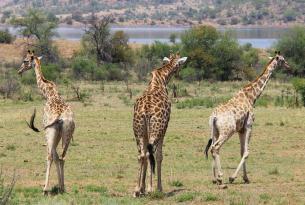 Sudáfrica: la famosa región de Kruger y más en Fin de Año