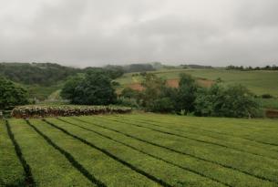 Azores: isla de Sao Miguel con 5 excursiones (salidas desde Barcelona)