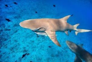 """Polinesia: Combinado Sociedad """"Alojamiento con encanto"""""""