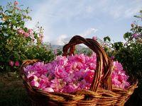 El Festival de las Rosas